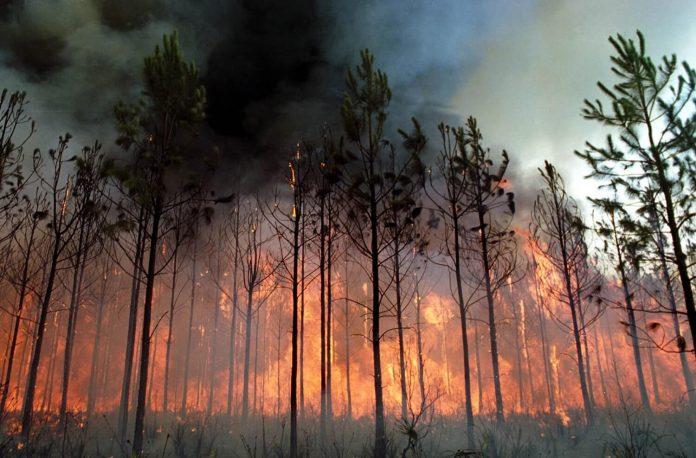 Oito pessoas detidas e 99 identificadas desde o início do ano por incêndio florestal