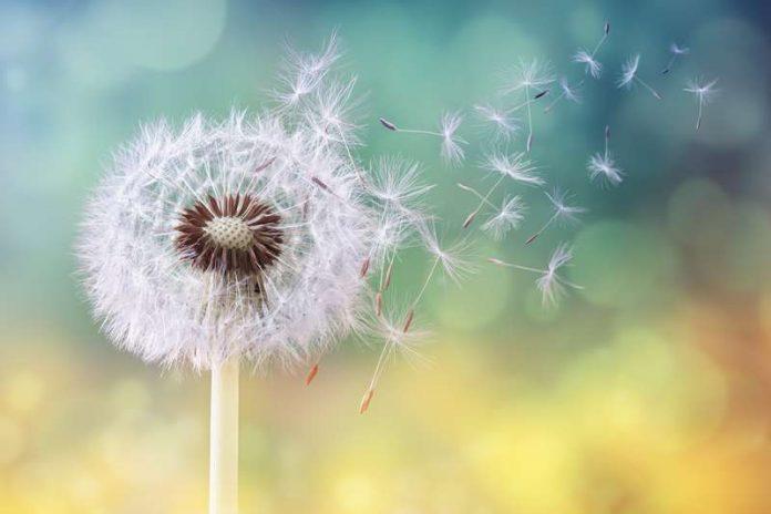 Época das alergias cada vez mais prolongada e intensa