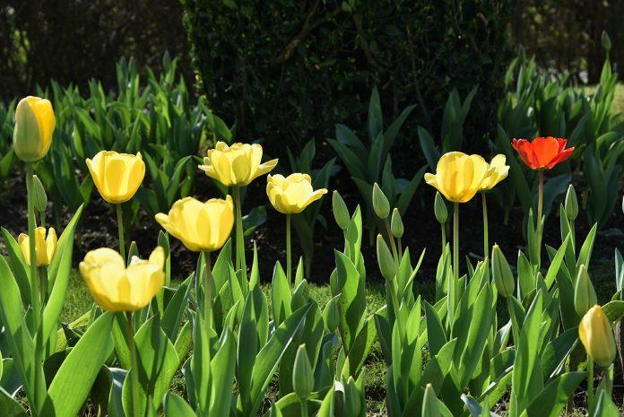 Primavera começa sábado com bom tempo e temperaturas a variar até aos 20 graus