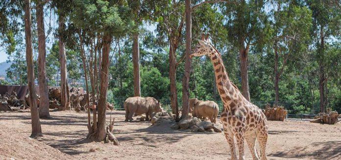 Zoo de Santo Inácio em Gaia ajuda animais a ultrapassar ausência de visitantes
