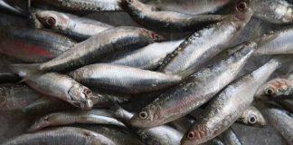 Pescadores tentaram impedir compra e venda de peixe na lota de Matosinhos