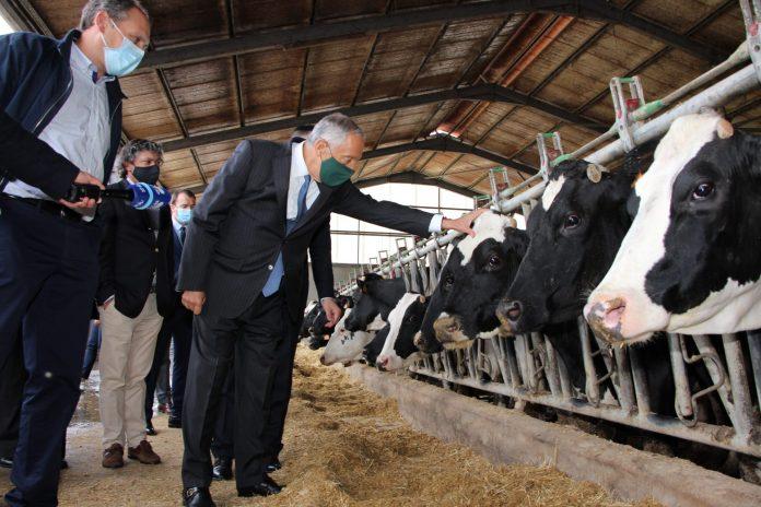 Produtores de leite pedem intervenção do Presidente da República