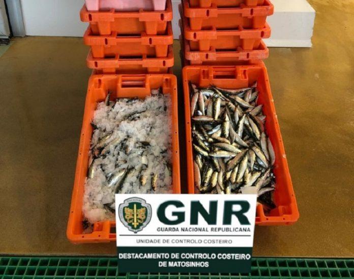 Apreensão de 273 quilos de sardinha na Póvoa de Varzim